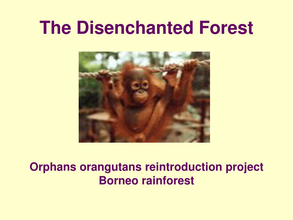 The Disenchanted Forest