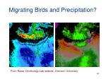 migrating birds and precipitation