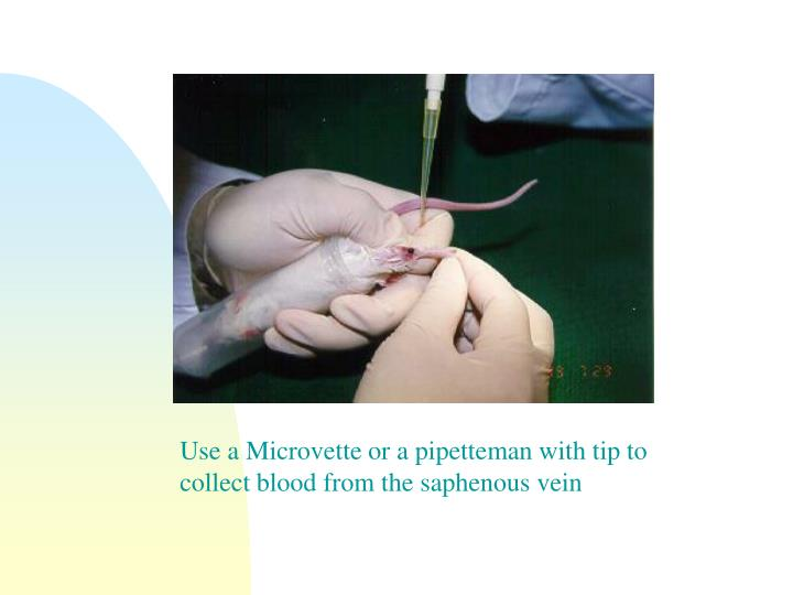 Use a Microvette or a pipetteman with tip to collect blood from the saphenous vein