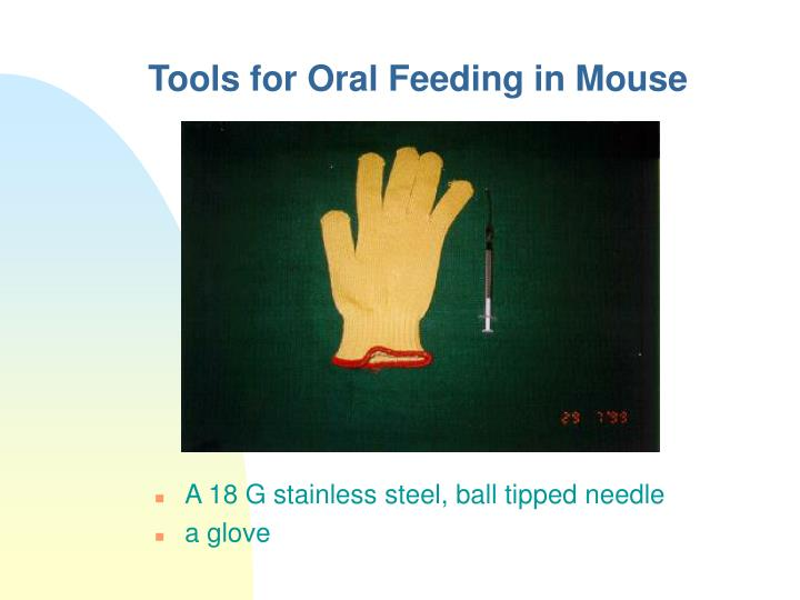 Tools for Oral Feeding in Mouse