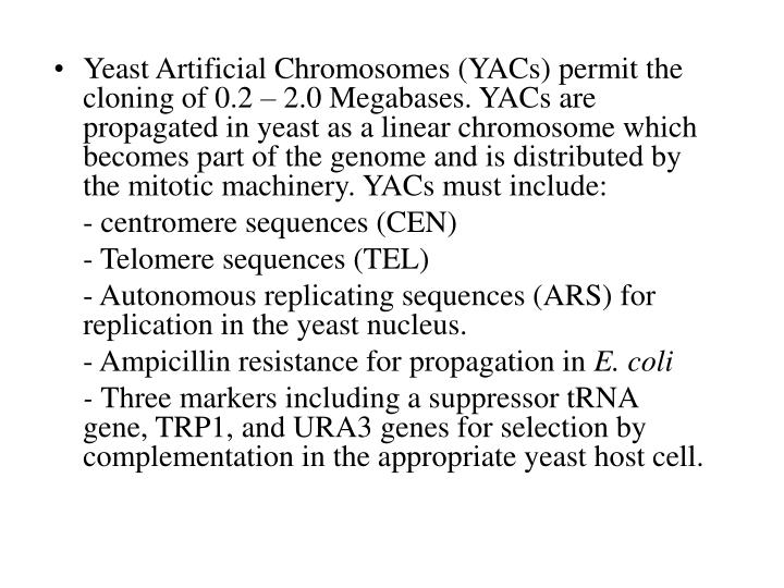 Yeast Artificial Chromosomes (YACs) permit the cloning of 0.2 – 2.0 Megabases. YACs are propagated in yeast as a linear chromosome which becomes part of the genome and is distributed by the mitotic machinery. YACs must include: