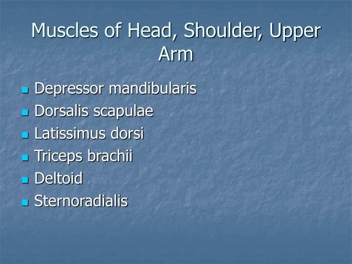 Muscles of Head, Shoulder, Upper Arm