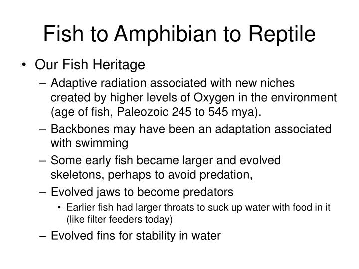 Fish to Amphibian to Reptile