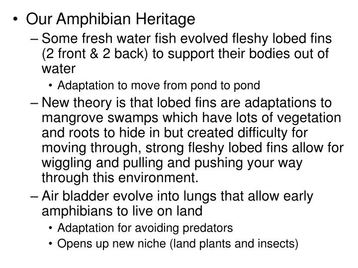 Our Amphibian Heritage