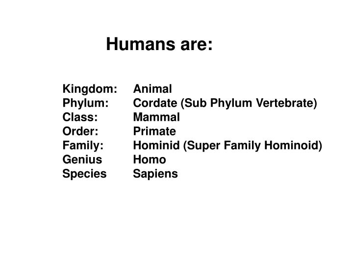 Humans are: