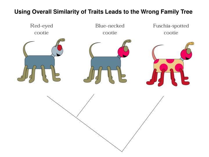 Using Overall Similarity of Traits Leads to the Wrong Family Tree