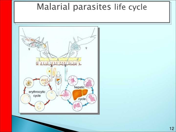 Malarial parasites