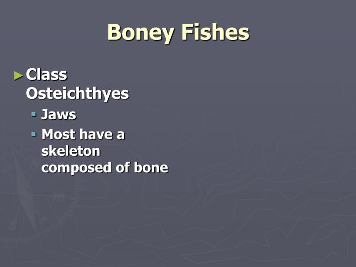 Boney Fishes