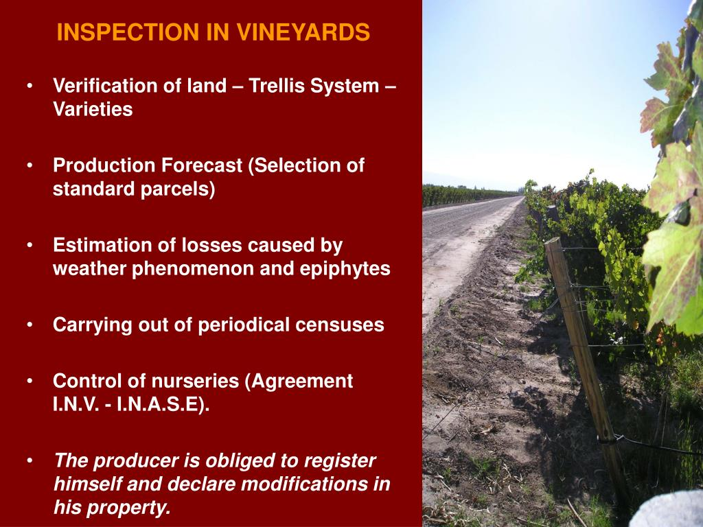 INSPECTION IN VINEYARDS