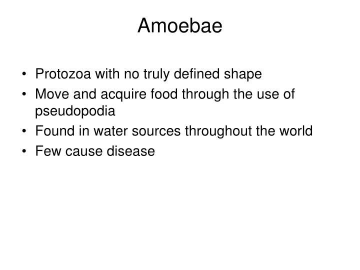 Amoebae