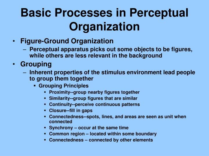 Basic Processes in Perceptual Organization