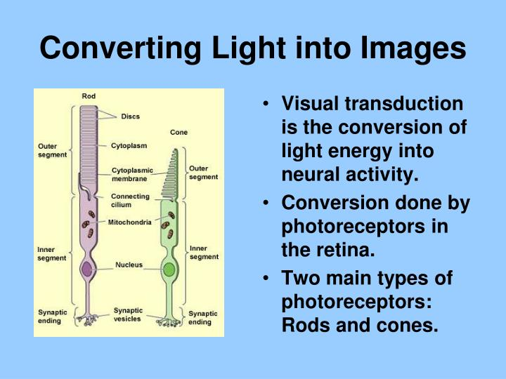 Converting Light into Images