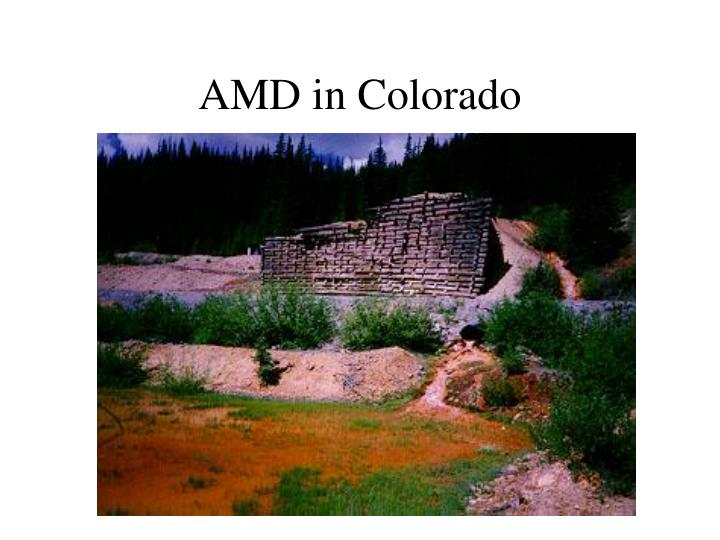 AMD in Colorado