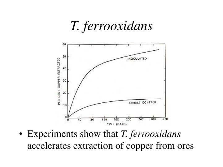 T. ferrooxidans