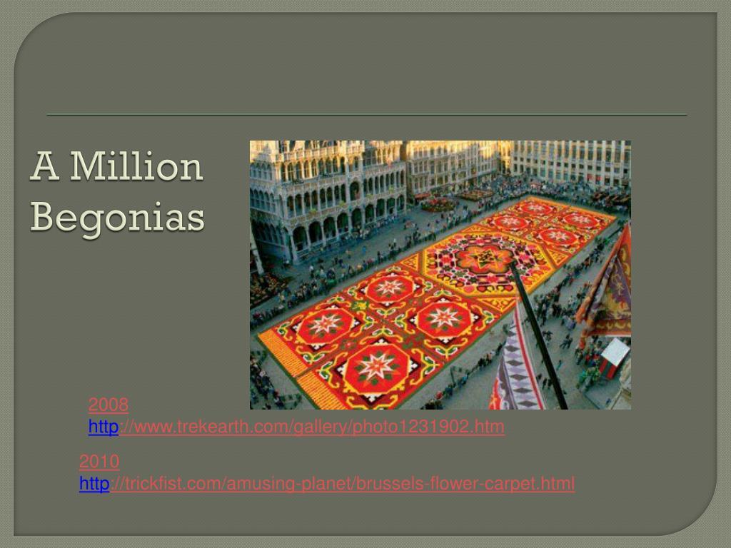A Million Begonias