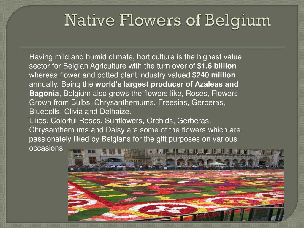 Native Flowers of Belgium