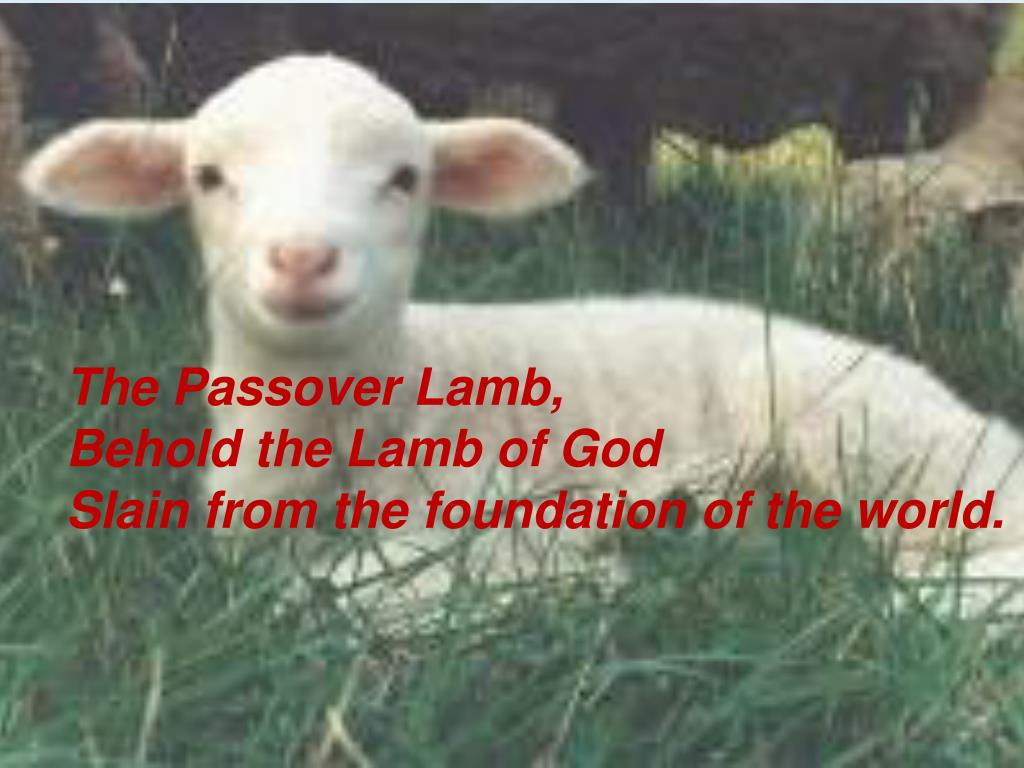 The Passover Lamb,