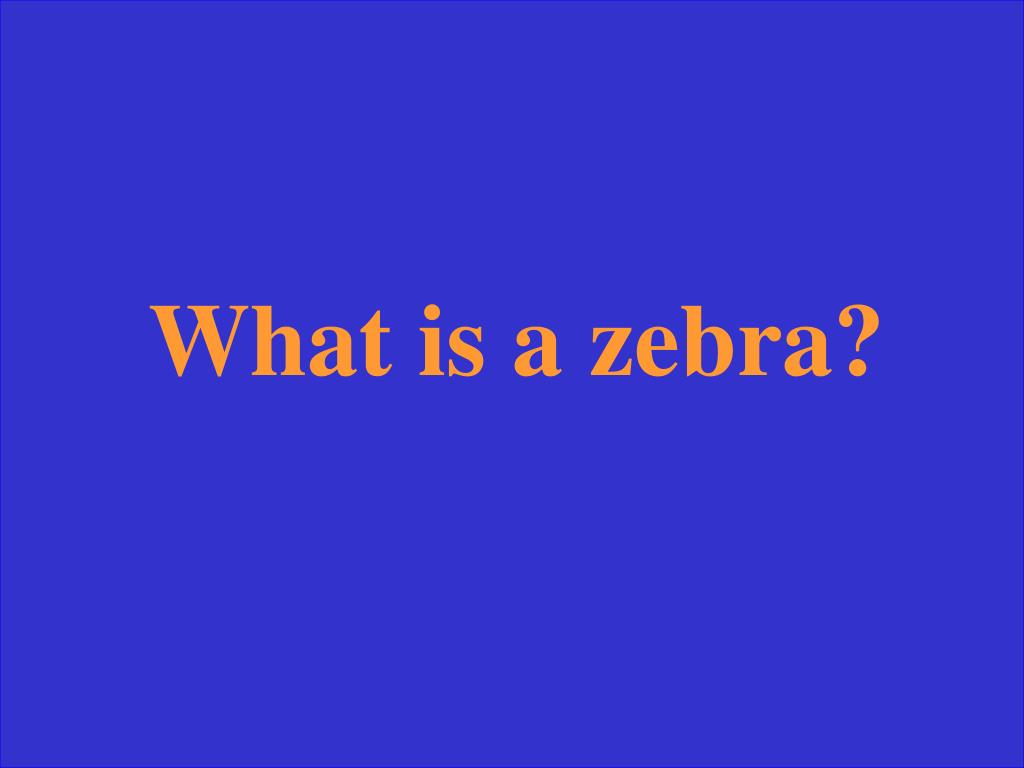 What is a zebra?