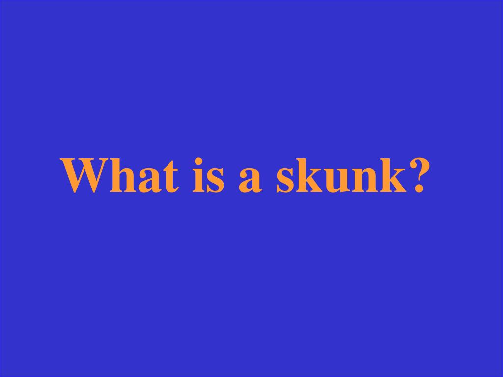What is a skunk?
