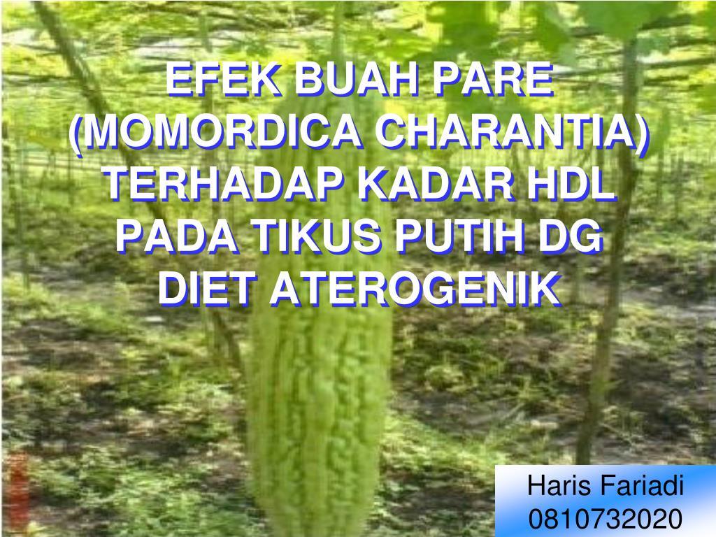 EFEK BUAH PARE (MOMORDICA CHARANTIA)