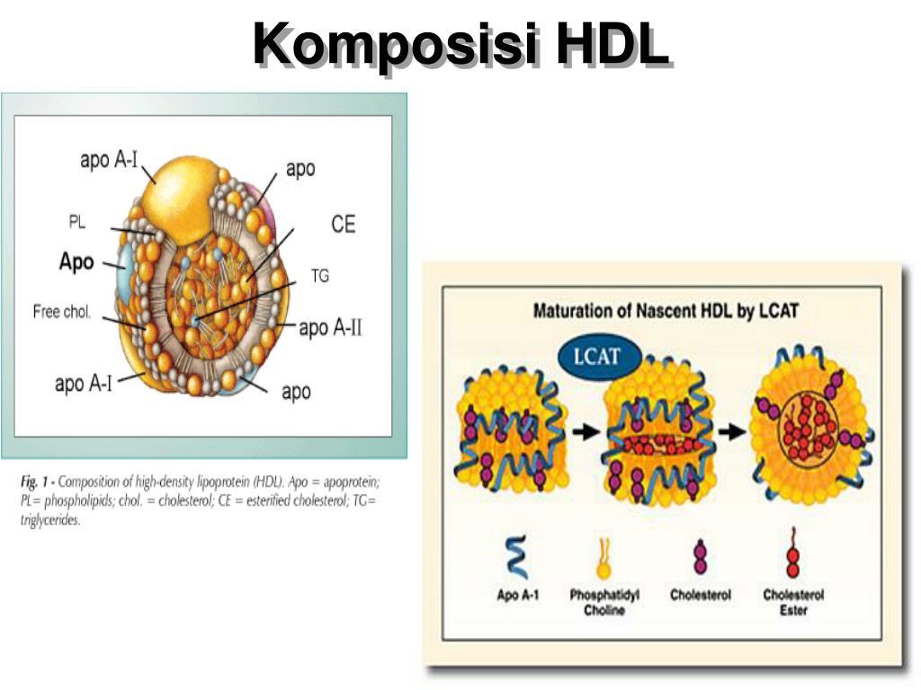 Komposisi HDL