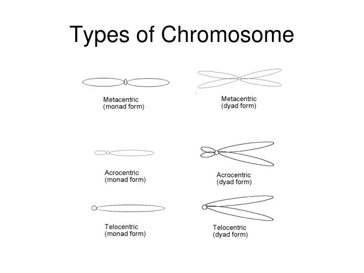 Types of chromosome1