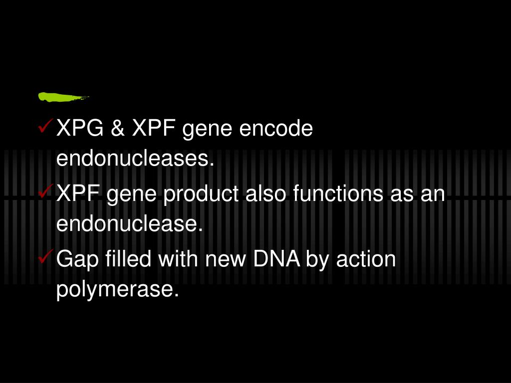XPG & XPF gene encode endonucleases.