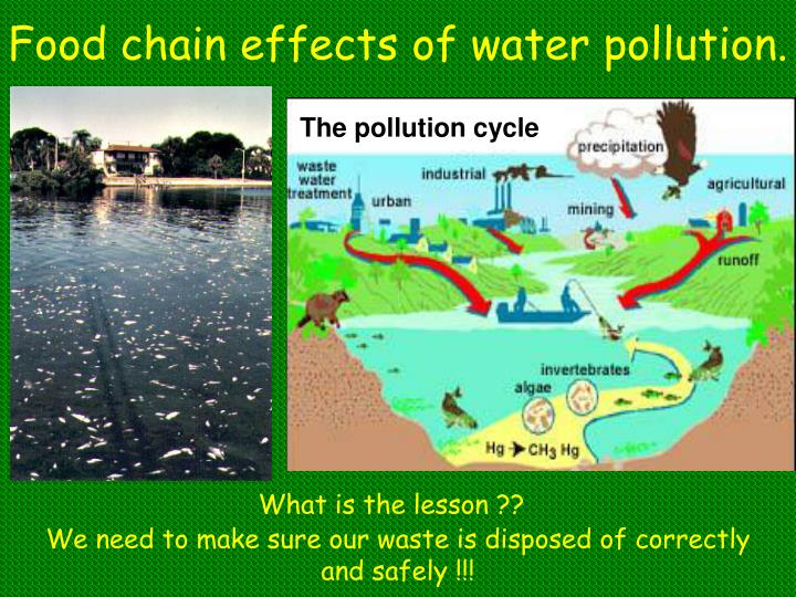 Food chain effects of water pollution.