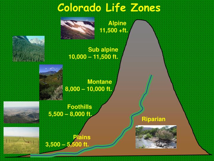 Colorado Life Zones