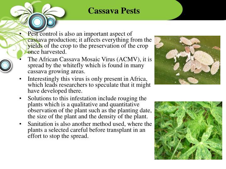 Cassava Pests