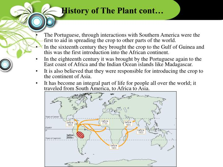 History of The Plant cont…