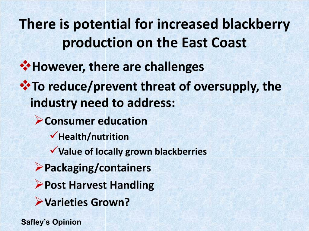 There is potential for increased blackberry production on the East Coast