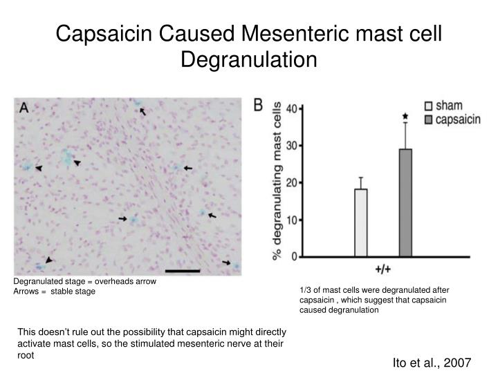 Capsaicin Caused Mesenteric mast cell Degranulation