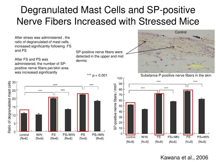 Degranulated Mast Cells and SP-positive Nerve Fibers Increased with Stressed Mice