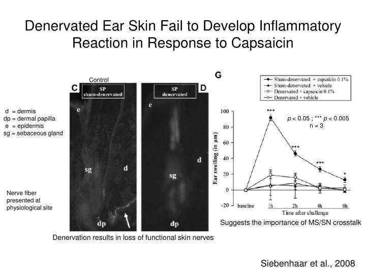 Denervated Ear Skin Fail to Develop Inflammatory Reaction in Response to Capsaicin