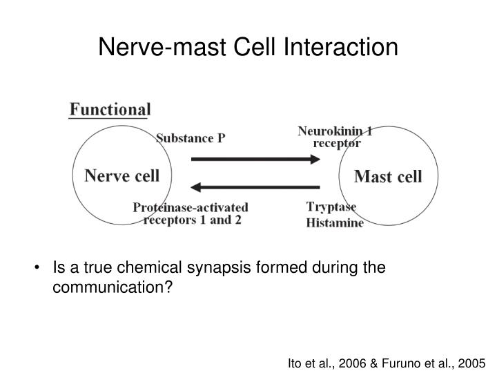 Nerve-mast Cell Interaction