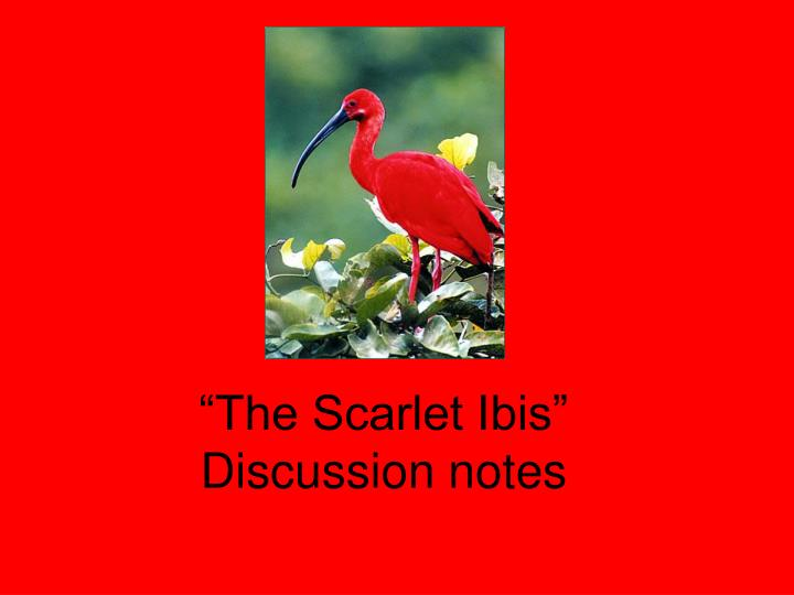 The scarlet ibis discussion notes