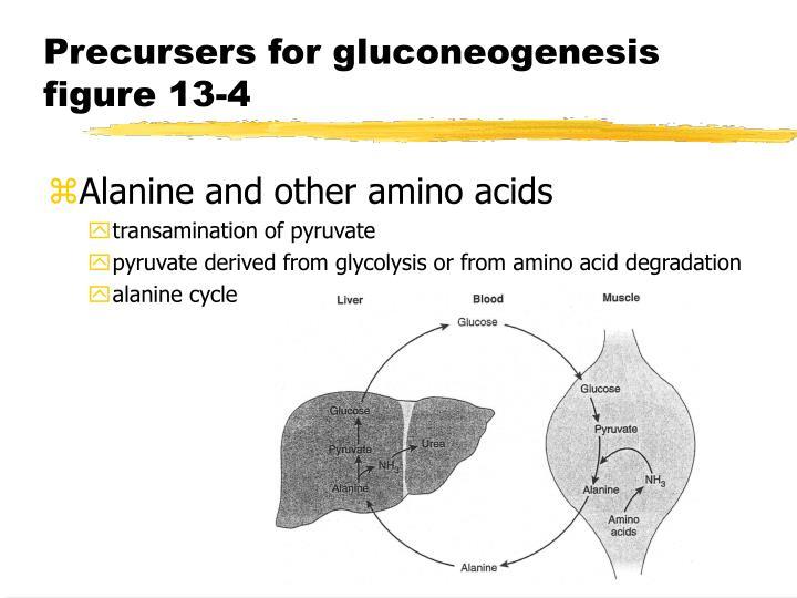 Precursers for gluconeogenesis