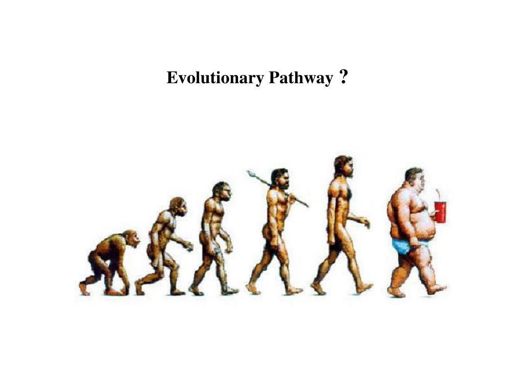 Evolutionary Pathway