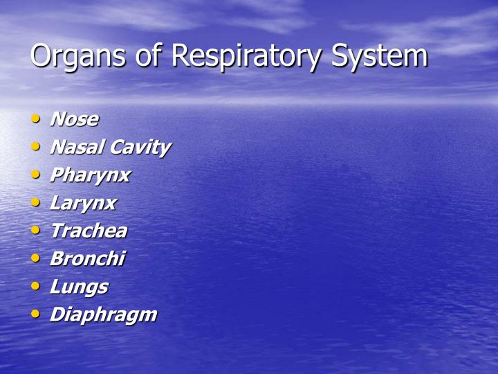 Organs of respiratory system