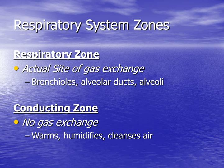 Respiratory System Zones