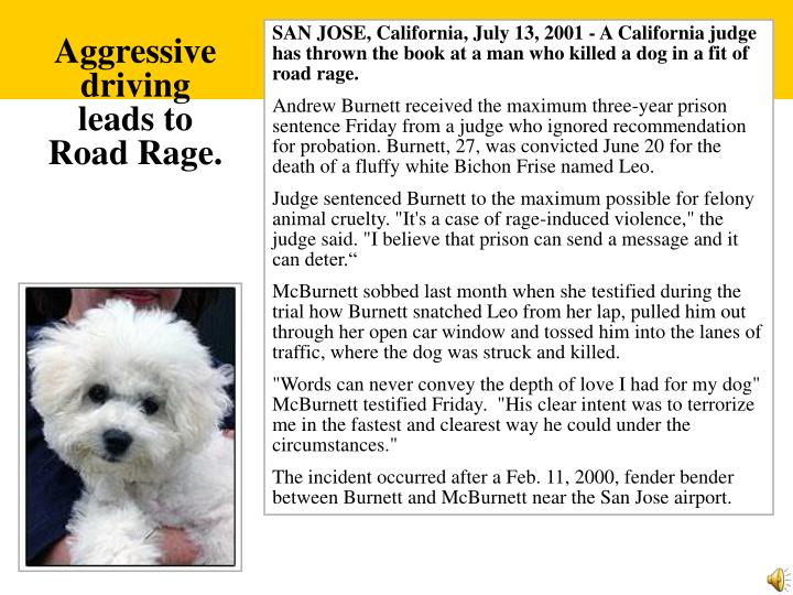 SAN JOSE, California, July 13, 2001 - A California judge has thrown the book at a man who killed a dog in a fit of road rage.