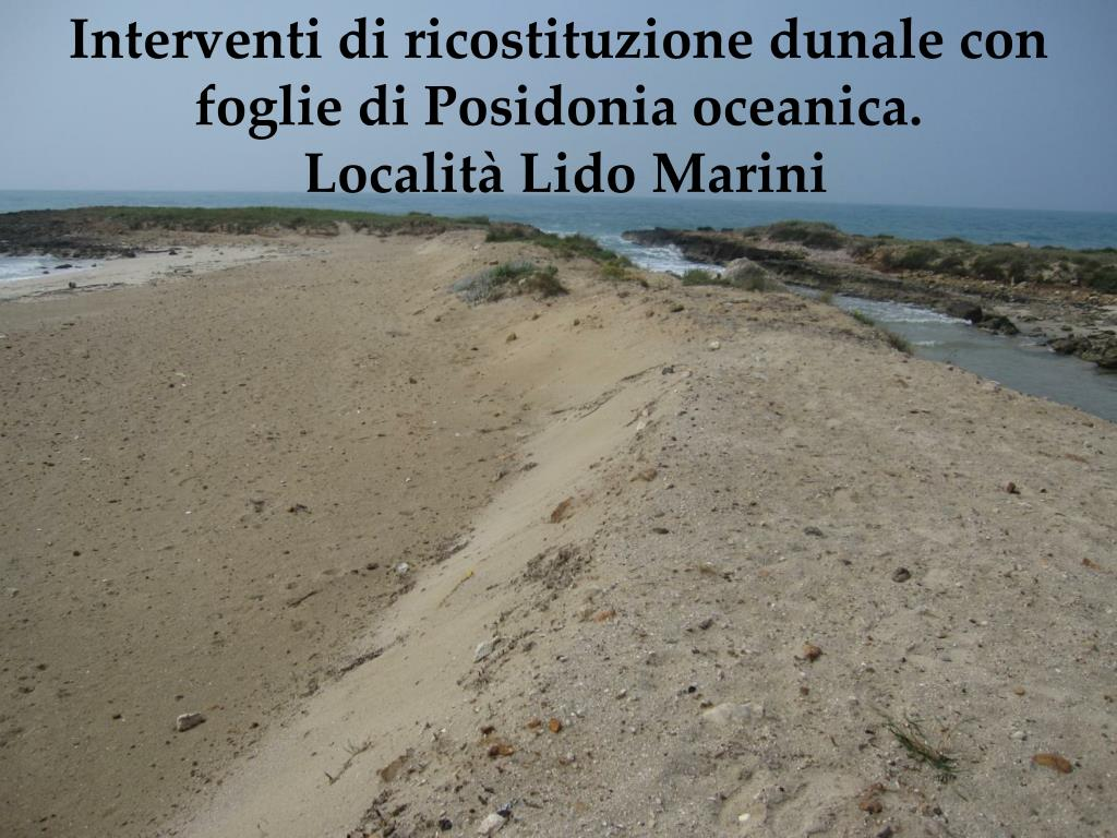 Interventi di ricostituzione dunale con foglie di Posidonia oceanica.