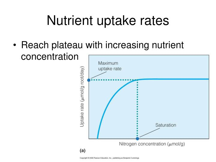 Nutrient uptake rates