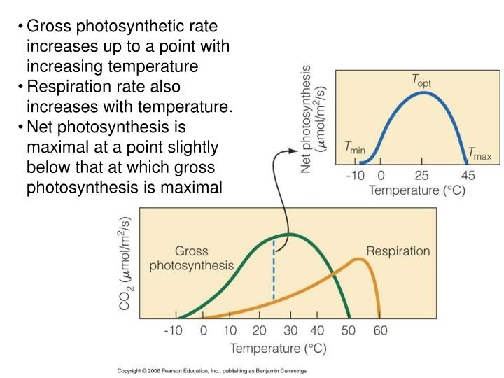 Gross photosynthetic rate increases up to a point with increasing temperature