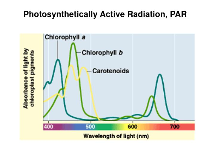 Photosynthetically Active Radiation, PAR