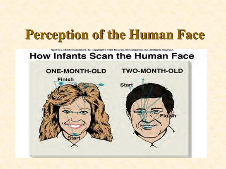 Perception of the Human Face