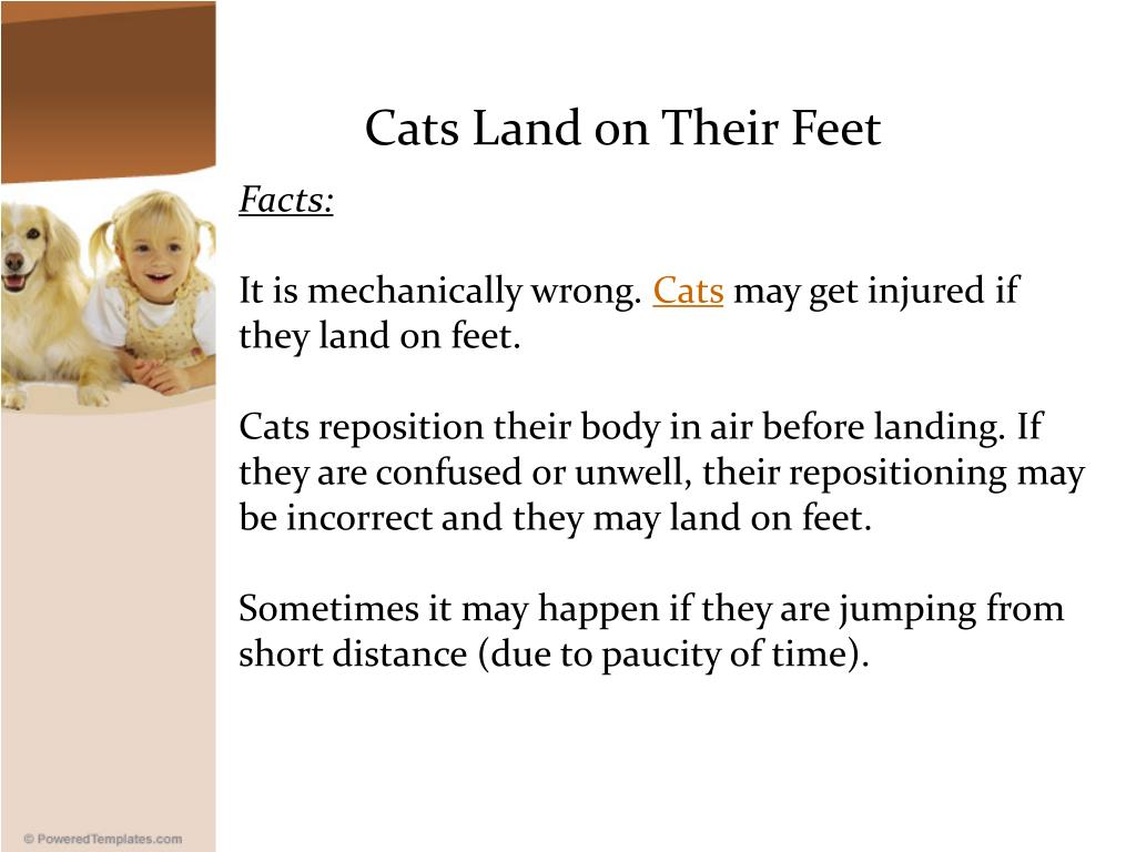 Cats Land on Their Feet