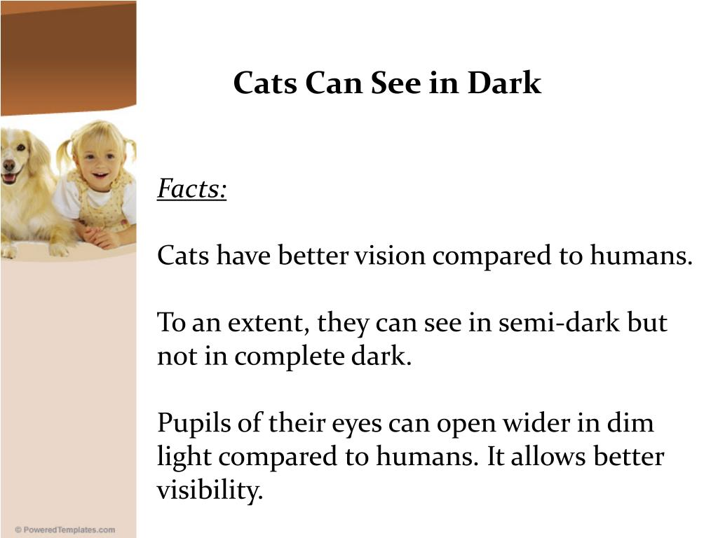 Cats Can See in Dark