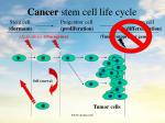 cancer stem cell life cycle